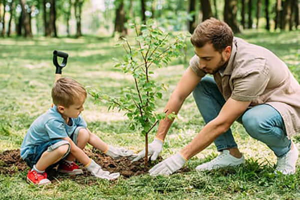 boom planten meersorgh